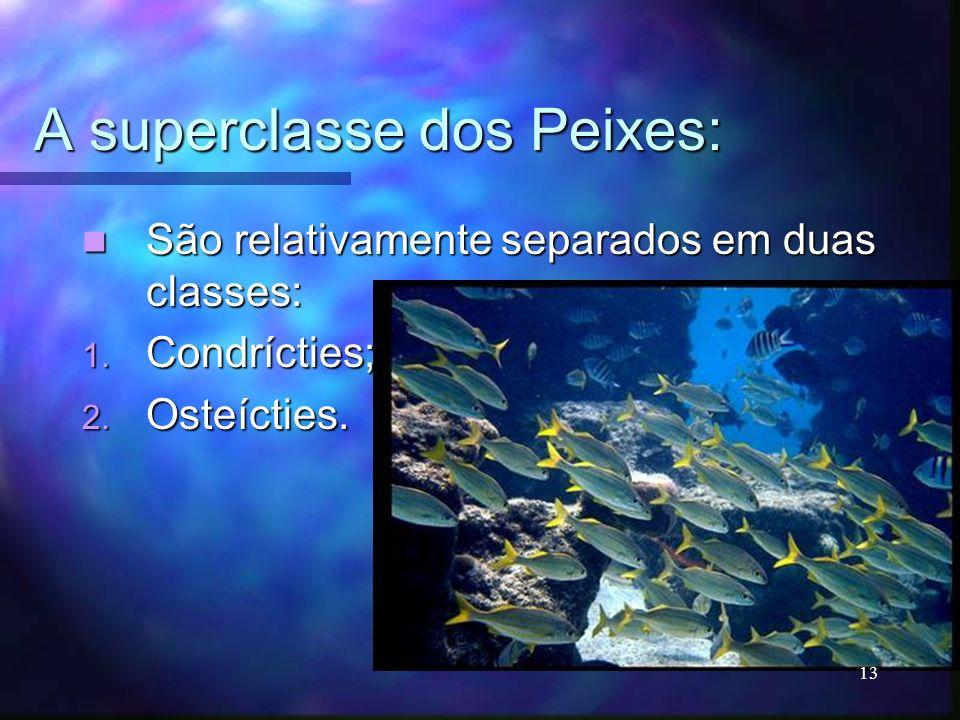 A superclasse dos Peixes: