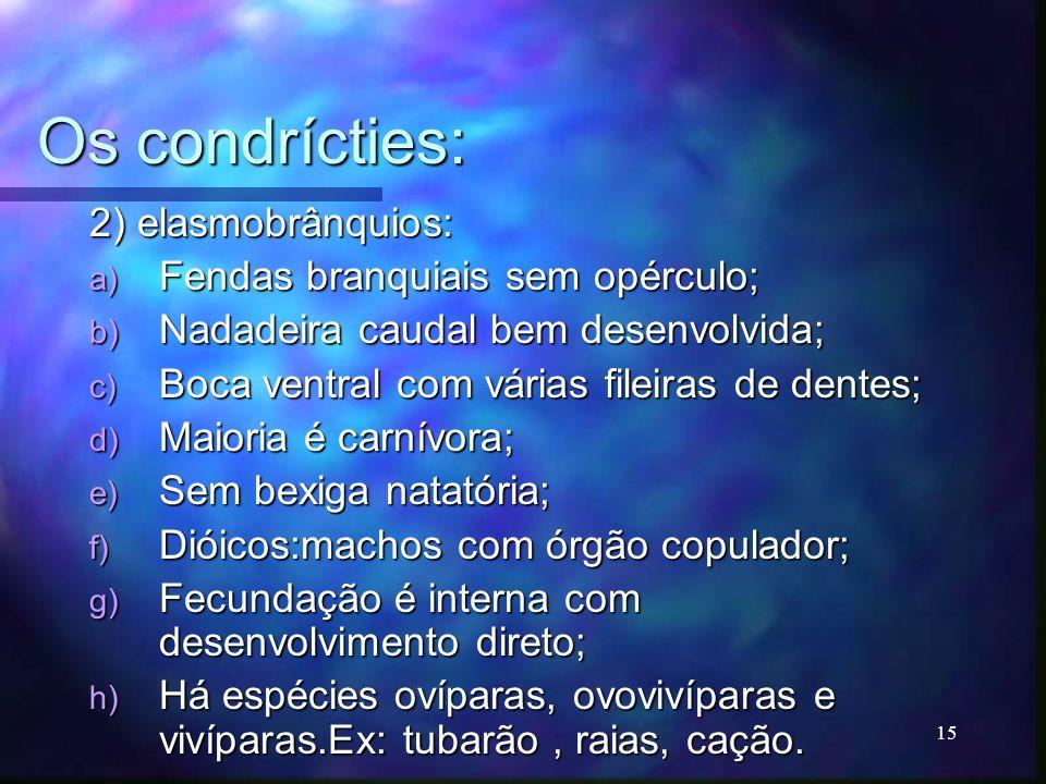 Os condrícties: 2) elasmobrânquios: Fendas branquiais sem opérculo;