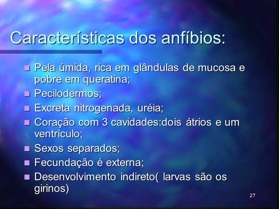Características dos anfíbios: