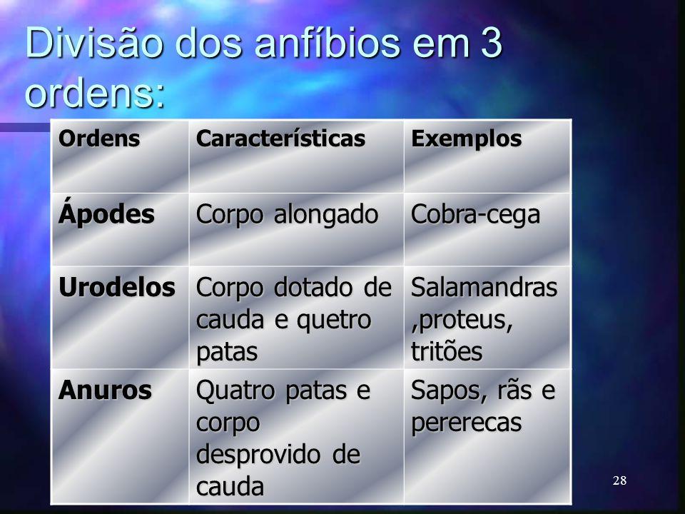 Divisão dos anfíbios em 3 ordens: