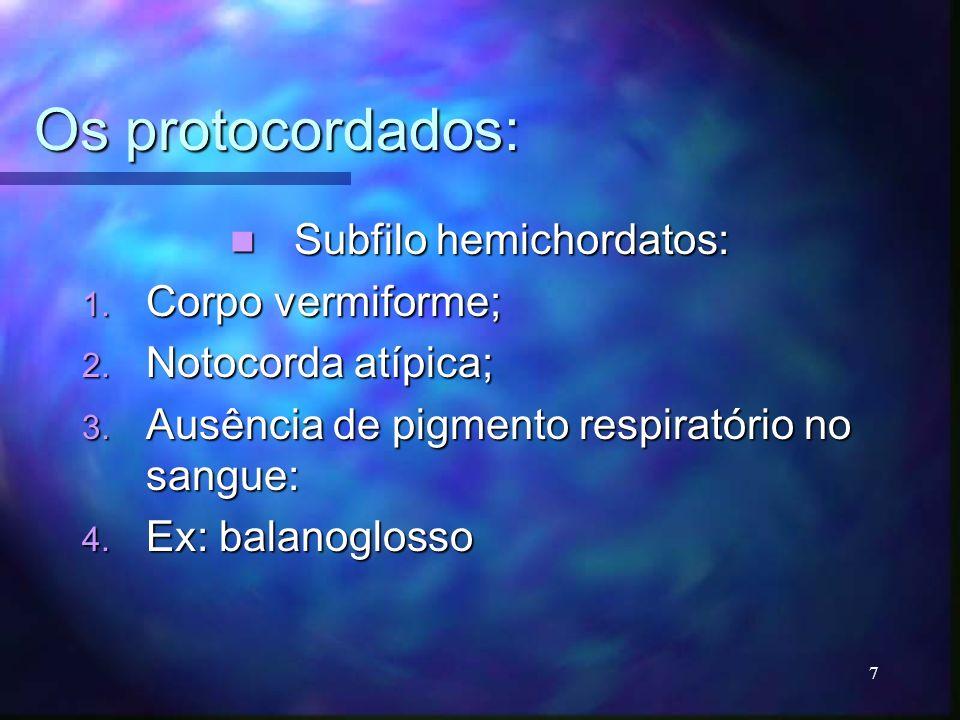 Subfilo hemichordatos: