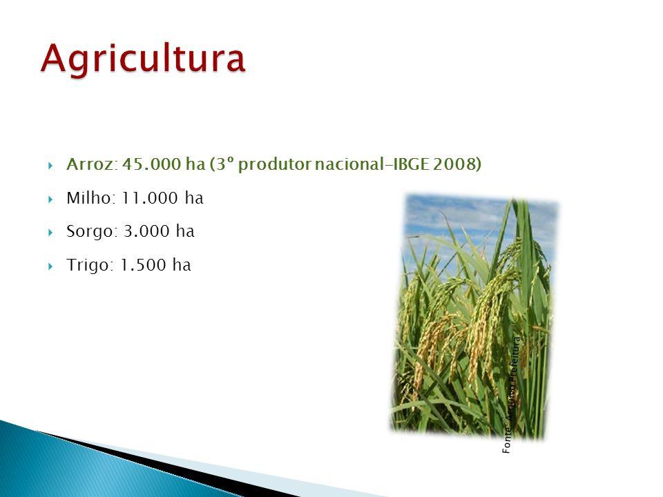 Agricultura Arroz: 45.000 ha (3º produtor nacional-IBGE 2008)