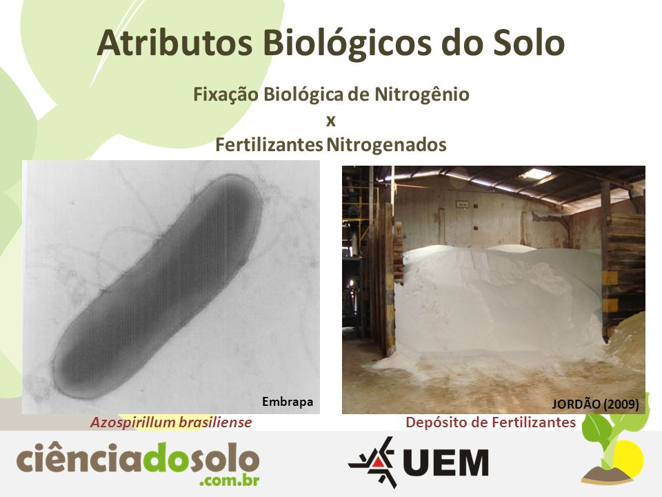 Atributos Biológicos do Solo