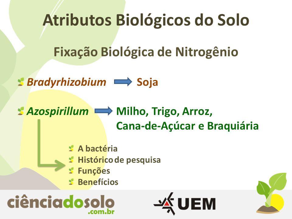Atributos Biológicos do Solo Fixação Biológica de Nitrogênio