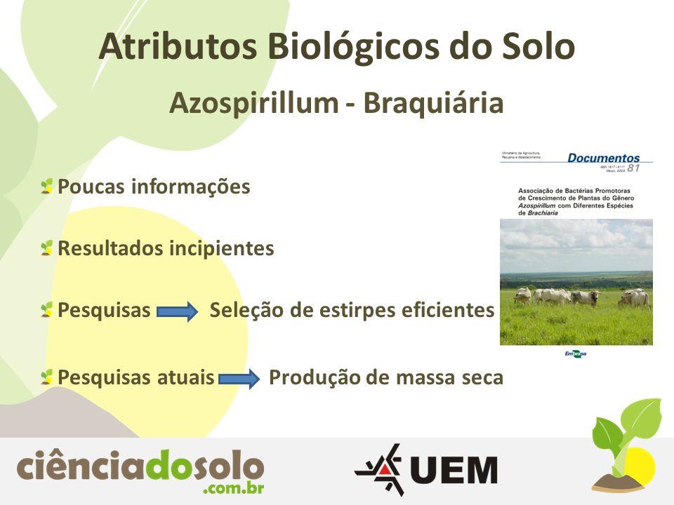 Atributos Biológicos do Solo Azospirillum - Braquiária