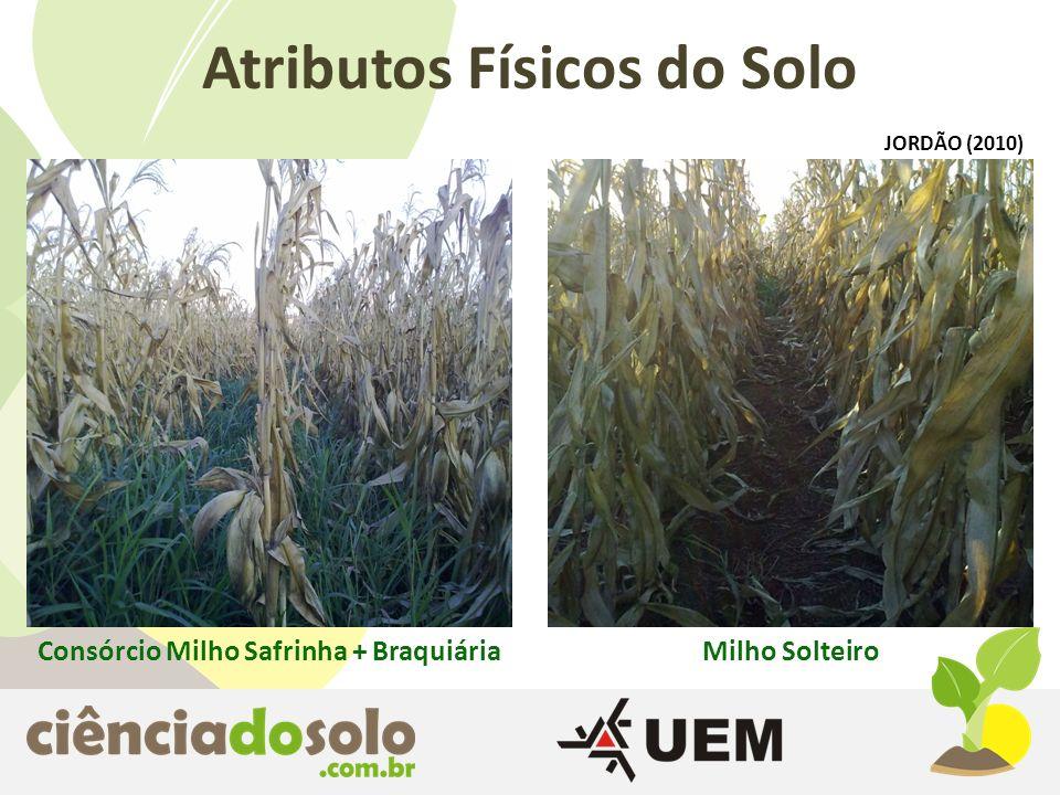 Atributos Físicos do Solo Consórcio Milho Safrinha + Braquiária
