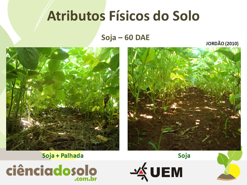 Atributos Físicos do Solo