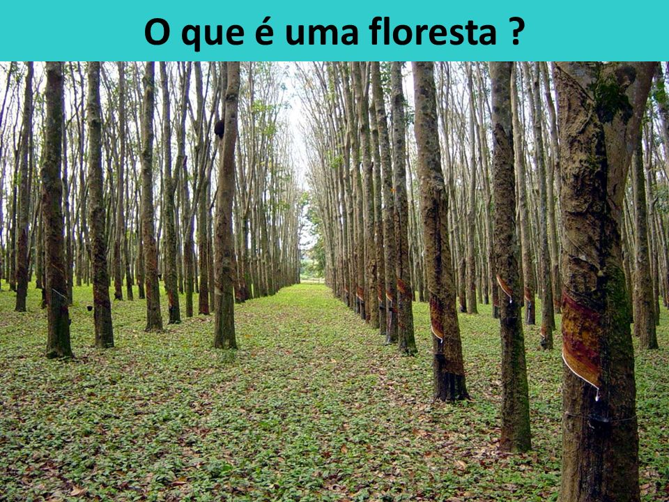 O que é uma floresta