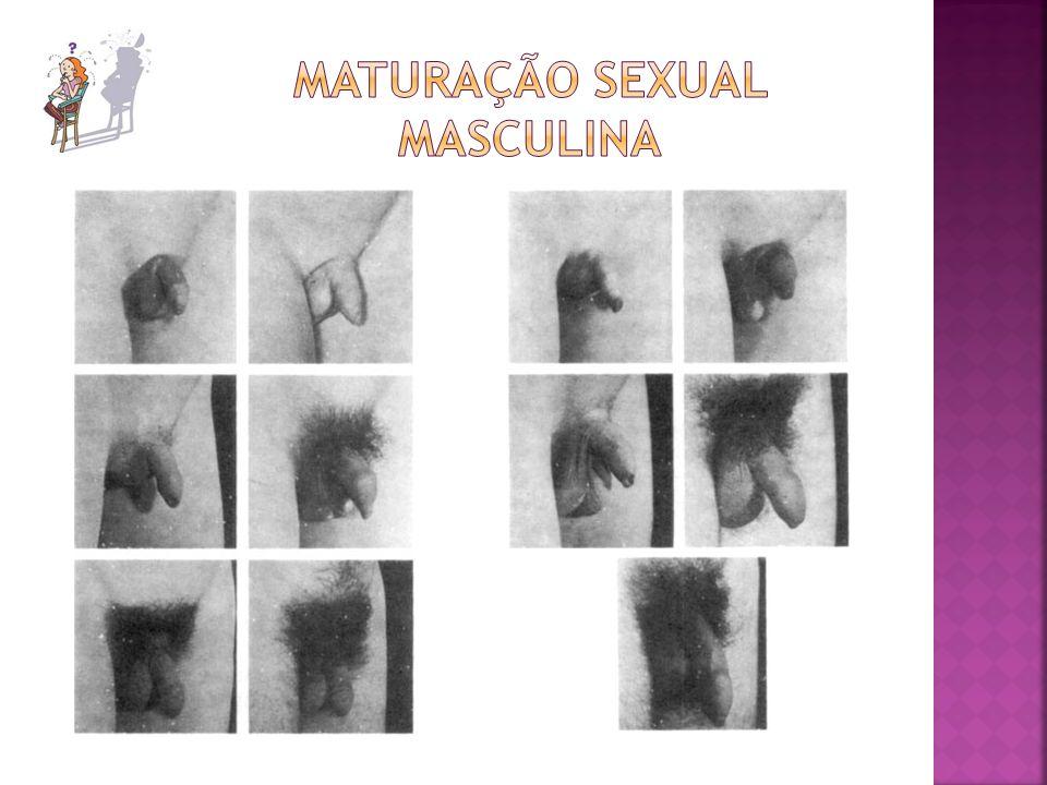 Maturação sexual masculina