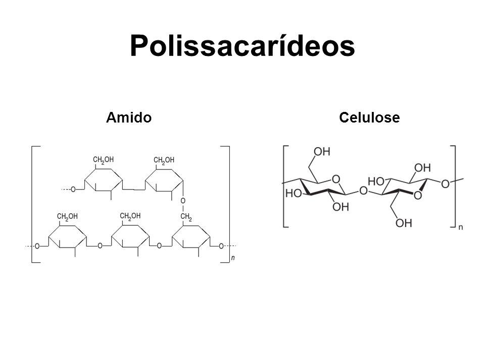 Polissacarídeos Amido Celulose