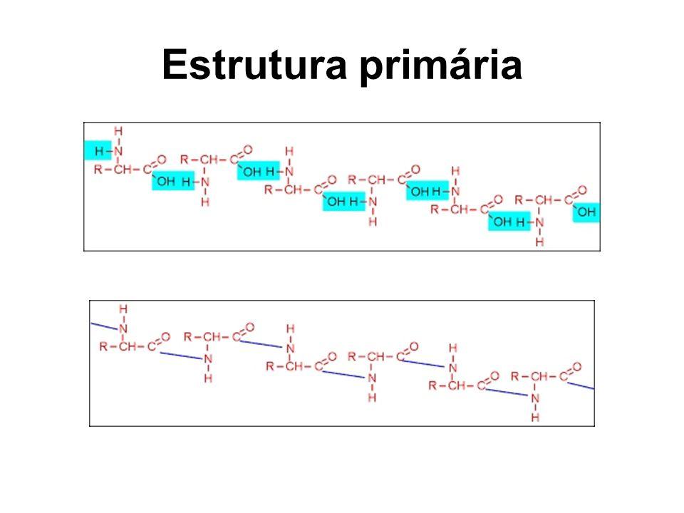 Estrutura primária
