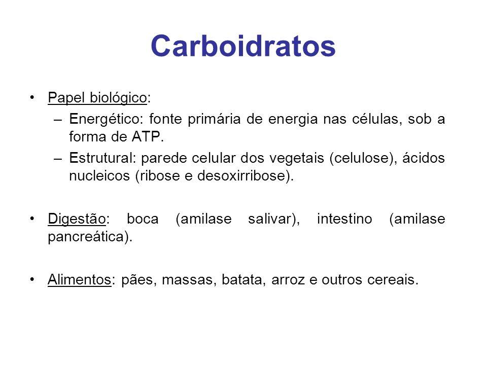 Carboidratos Papel biológico: