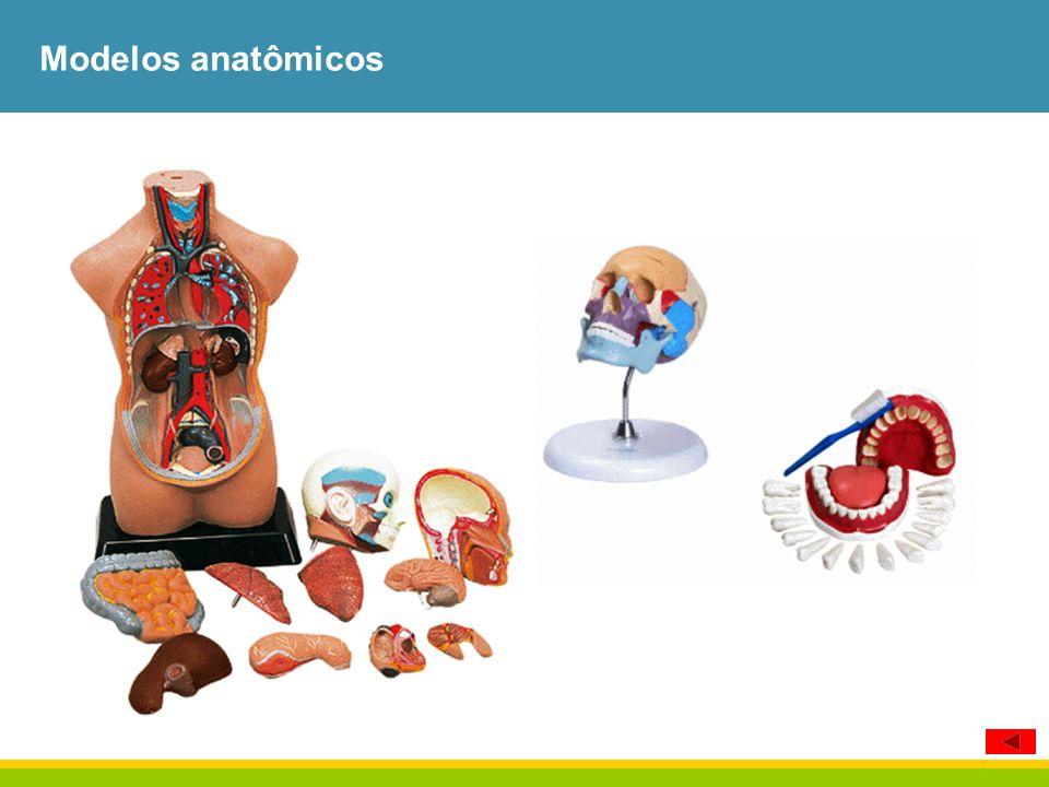 Modelos anatômicos 100