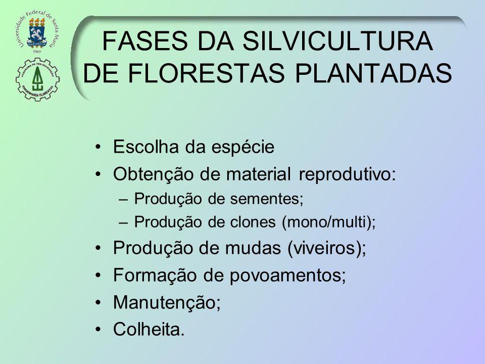 FASES DA SILVICULTURA DE FLORESTAS PLANTADAS