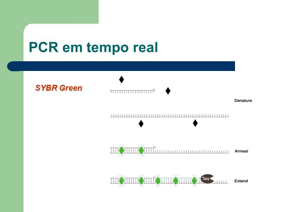 PCR em tempo real SYBR Green