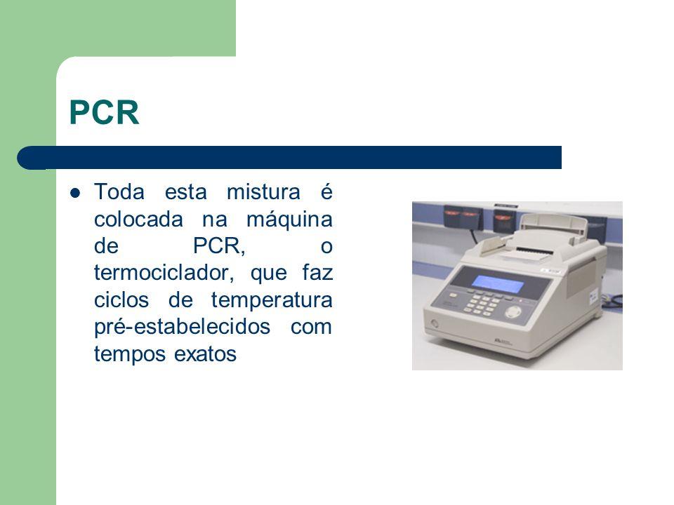 PCR Toda esta mistura é colocada na máquina de PCR, o termociclador, que faz ciclos de temperatura pré-estabelecidos com tempos exatos.