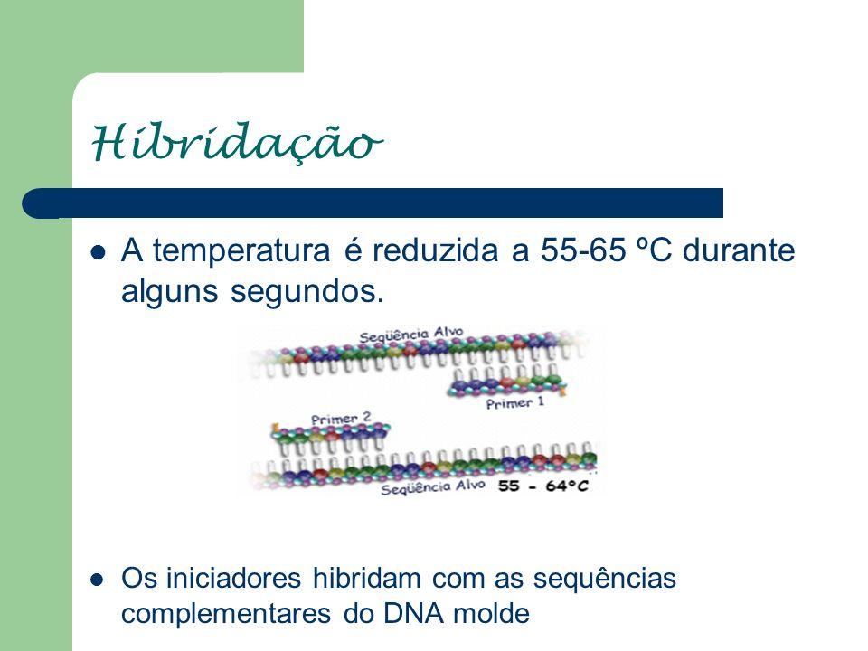 Hibridação A temperatura é reduzida a 55-65 ºC durante alguns segundos.