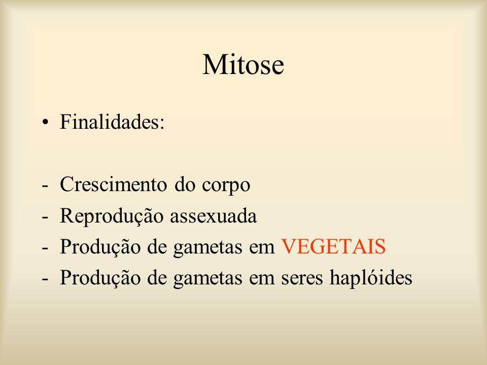 Mitose Finalidades: Crescimento do corpo Reprodução assexuada