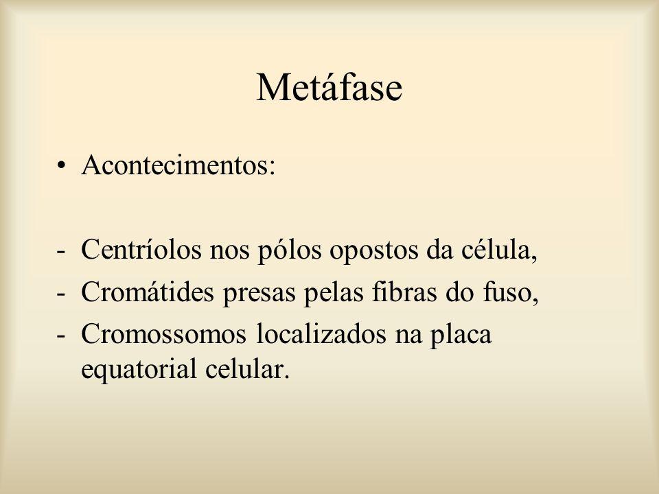 Metáfase Acontecimentos: Centríolos nos pólos opostos da célula,
