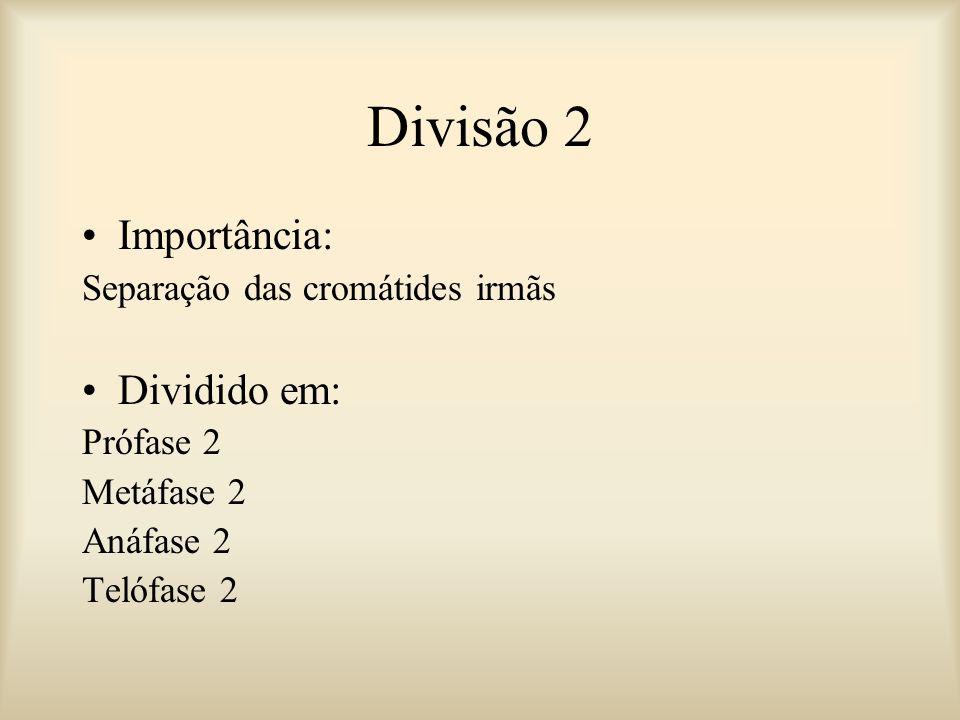 Divisão 2 Importância: Dividido em: Separação das cromátides irmãs