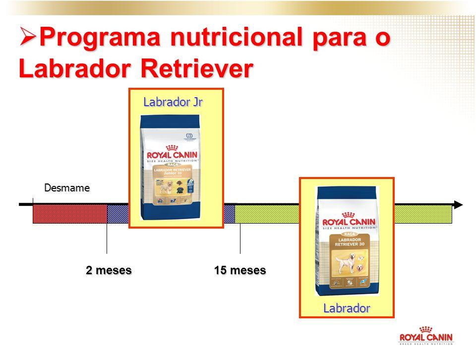 Programa nutricional para o Labrador Retriever