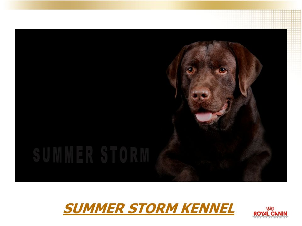 SUMMER STORM KENNEL