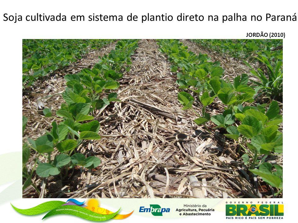 Soja cultivada em sistema de plantio direto na palha no Paraná
