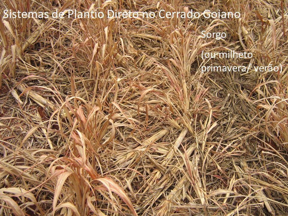 Sistemas de Plantio Direto no Cerrado Goiano