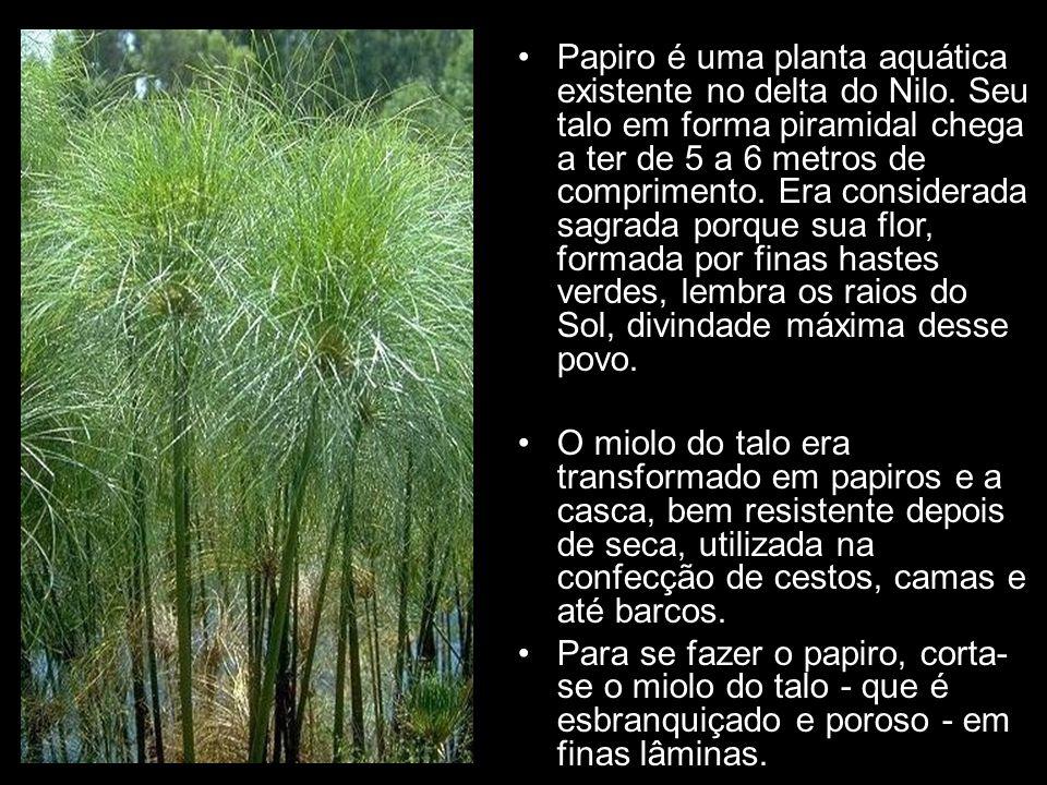 Papiro é uma planta aquática existente no delta do Nilo