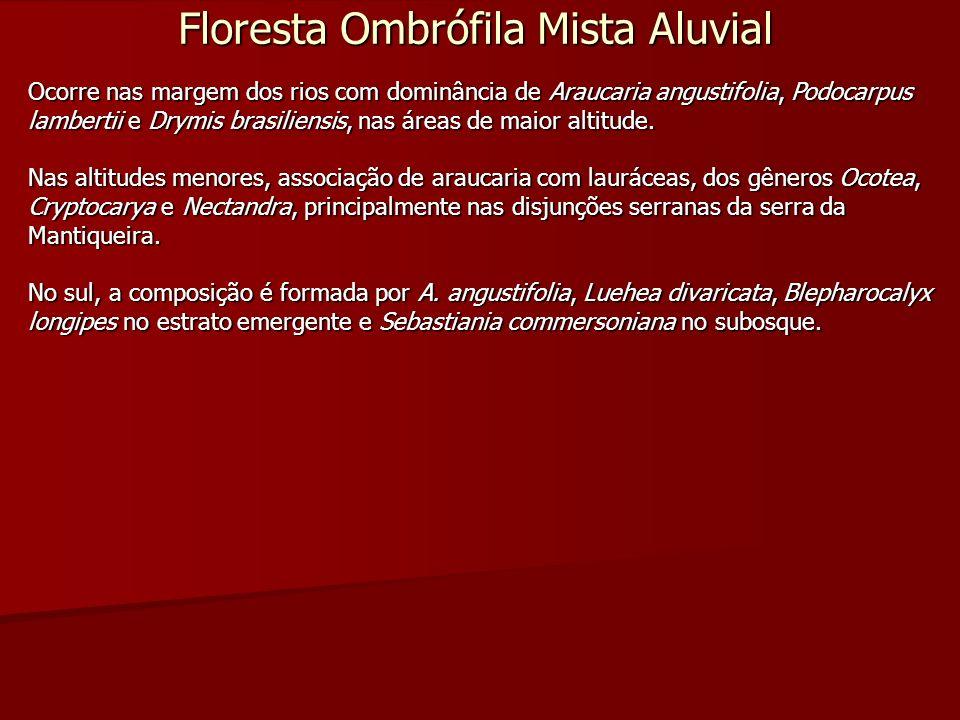Floresta Ombrófila Mista Aluvial