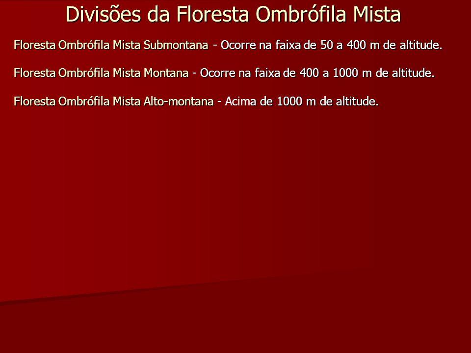Divisões da Floresta Ombrófila Mista