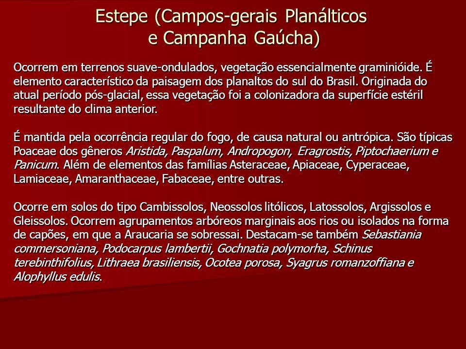 Estepe (Campos-gerais Planálticos e Campanha Gaúcha)