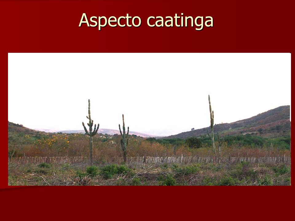 Aspecto caatinga