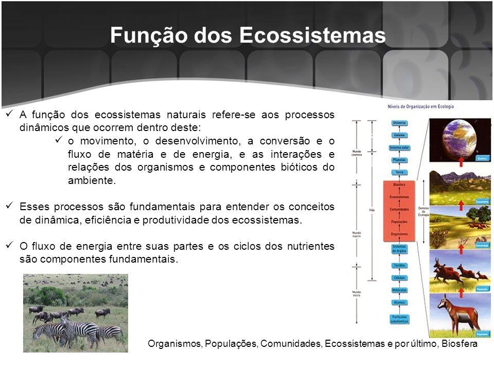 Função dos Ecossistemas