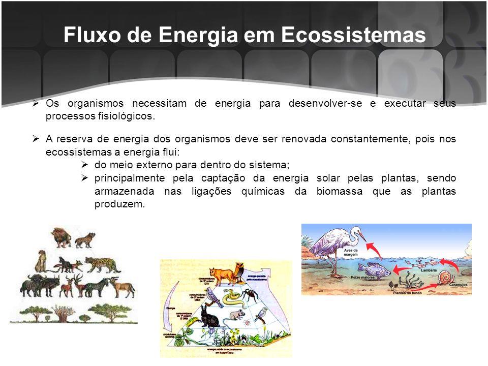 Fluxo de Energia em Ecossistemas