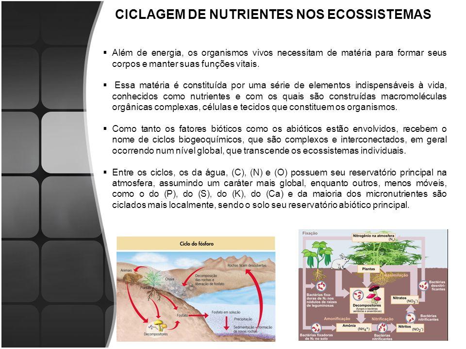 CICLAGEM DE NUTRIENTES NOS ECOSSISTEMAS