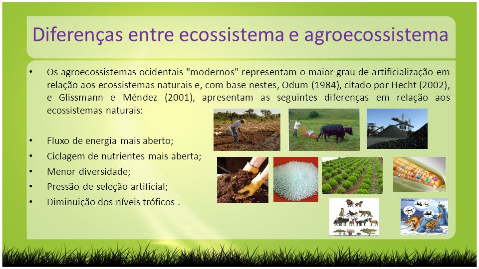 Diferenças entre ecossistema e agroecossistema