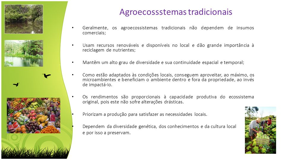 Agroecossstemas tradicionais