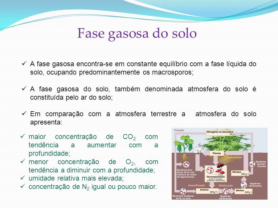 Fase gasosa do solo A fase gasosa encontra-se em constante equilíbrio com a fase líquida do solo, ocupando predominantemente os macrosporos;