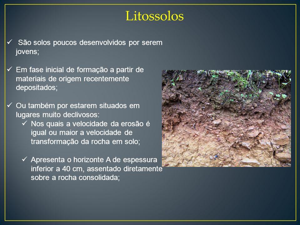 Litossolos São solos poucos desenvolvidos por serem jovens;