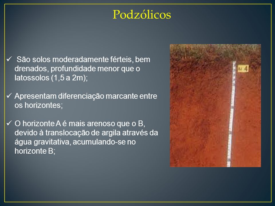 Podzólicos São solos moderadamente férteis, bem drenados, profundidade menor que o latossolos (1,5 a 2m);