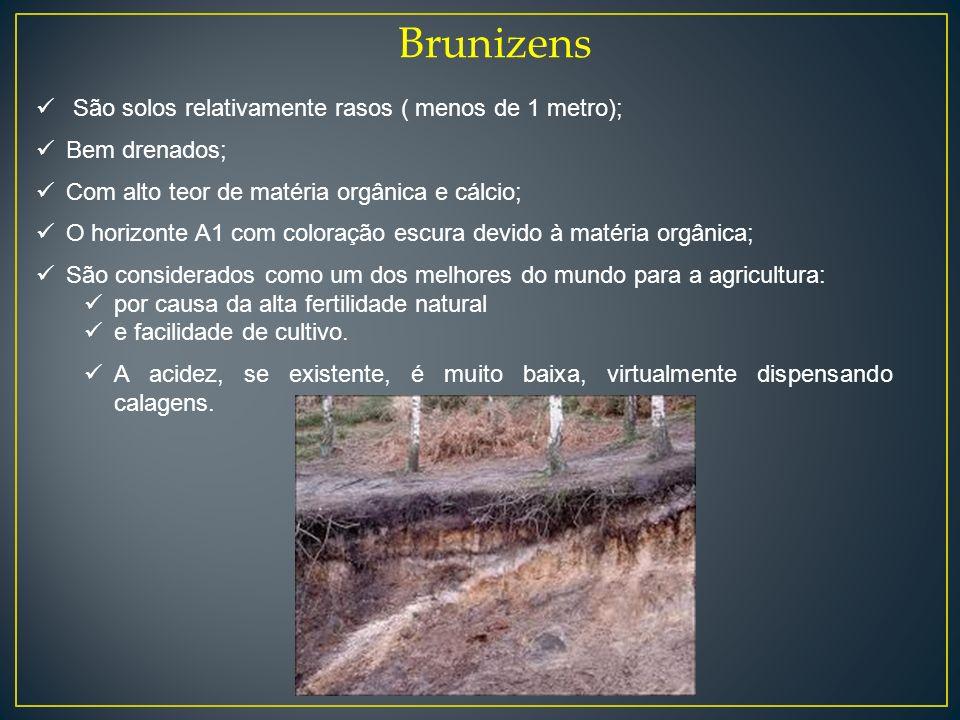 Brunizens São solos relativamente rasos ( menos de 1 metro);