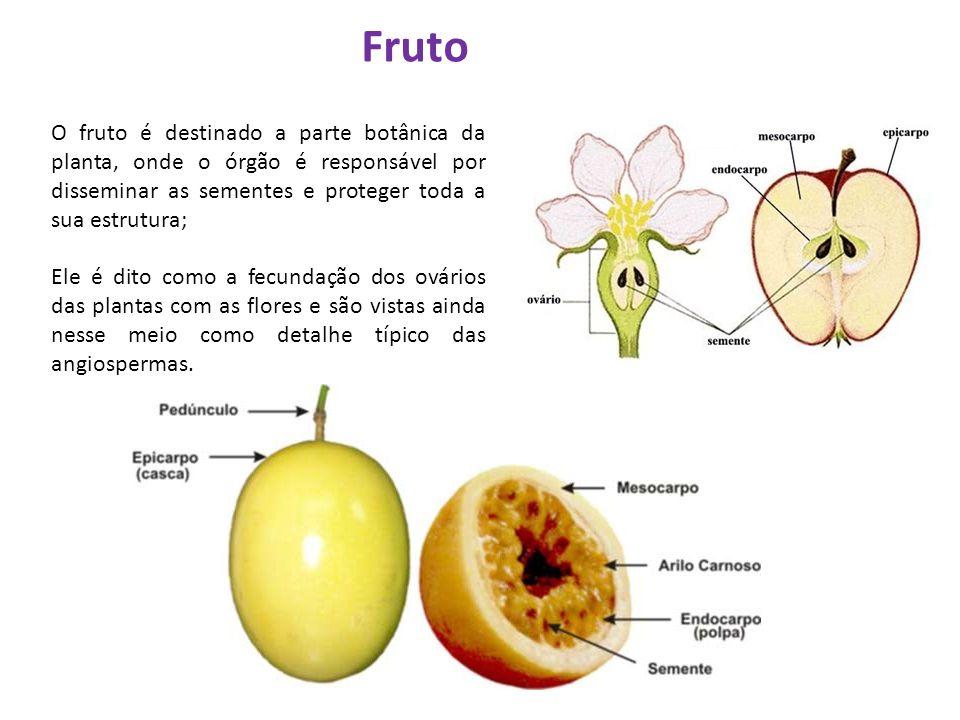 Fruto O fruto é destinado a parte botânica da planta, onde o órgão é responsável por disseminar as sementes e proteger toda a sua estrutura;