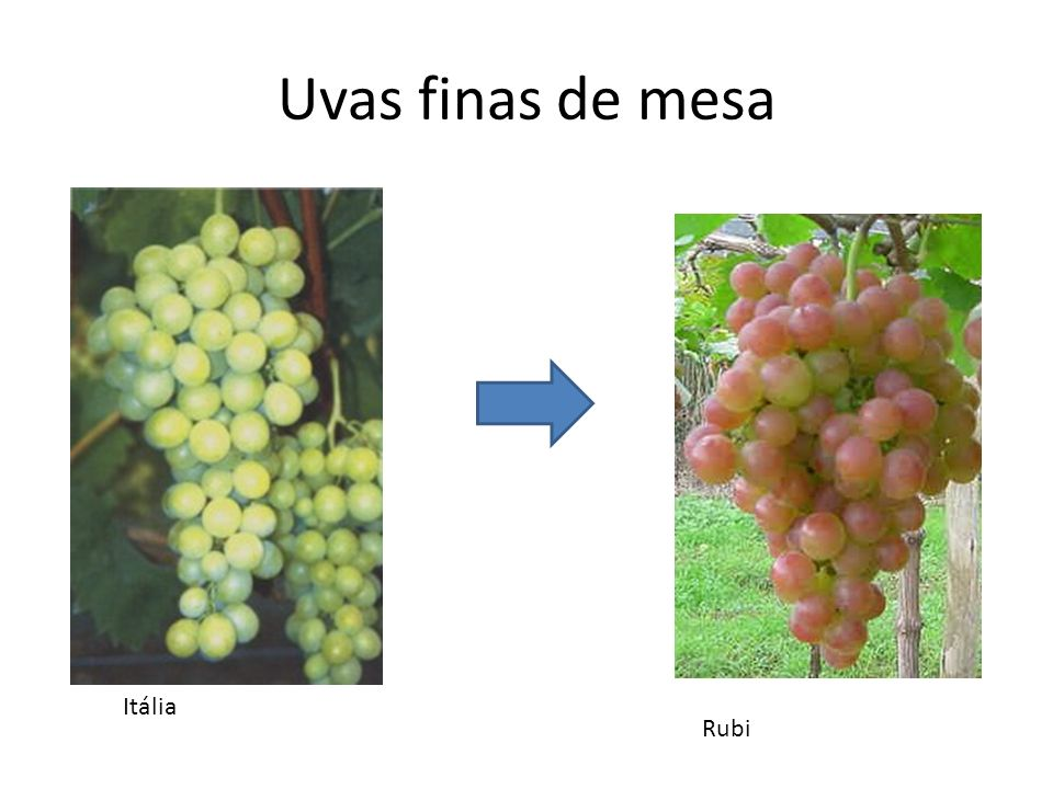 Uvas finas de mesa Itália Rubi
