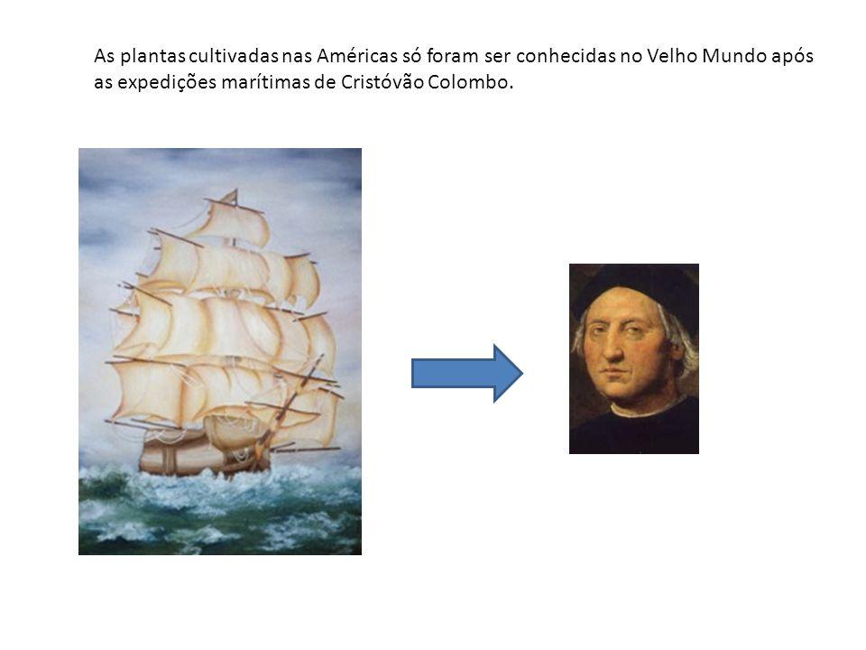 As plantas cultivadas nas Américas só foram ser conhecidas no Velho Mundo após as expedições marítimas de Cristóvão Colombo.
