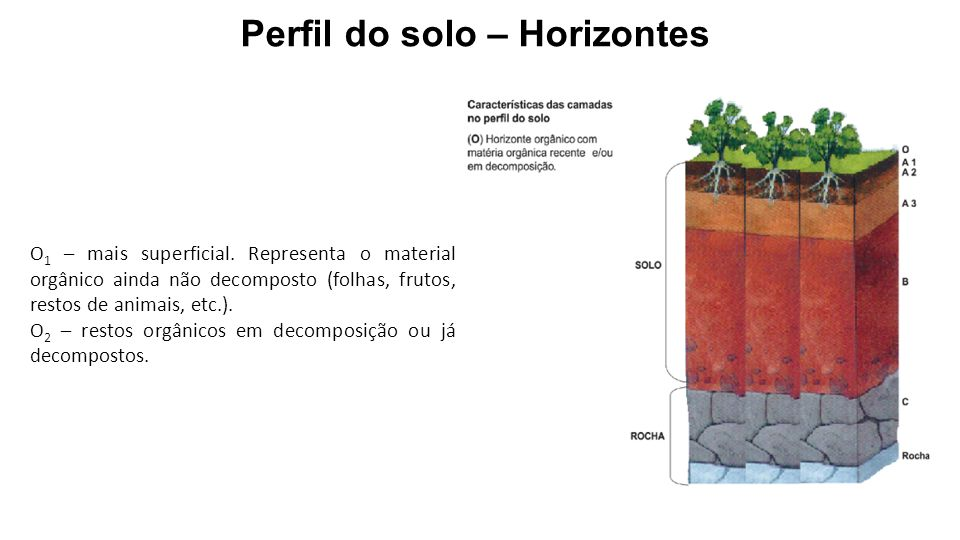 Perfil do solo – Horizontes