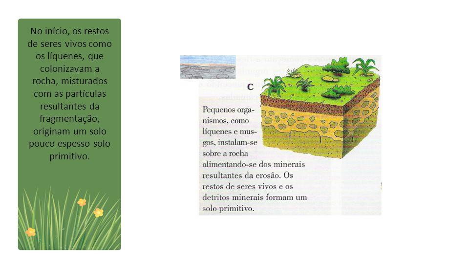 No início, os restos de seres vivos como os líquenes, que colonizavam a rocha, misturados com as partículas resultantes da fragmentação, originam um solo pouco espesso solo primitivo.