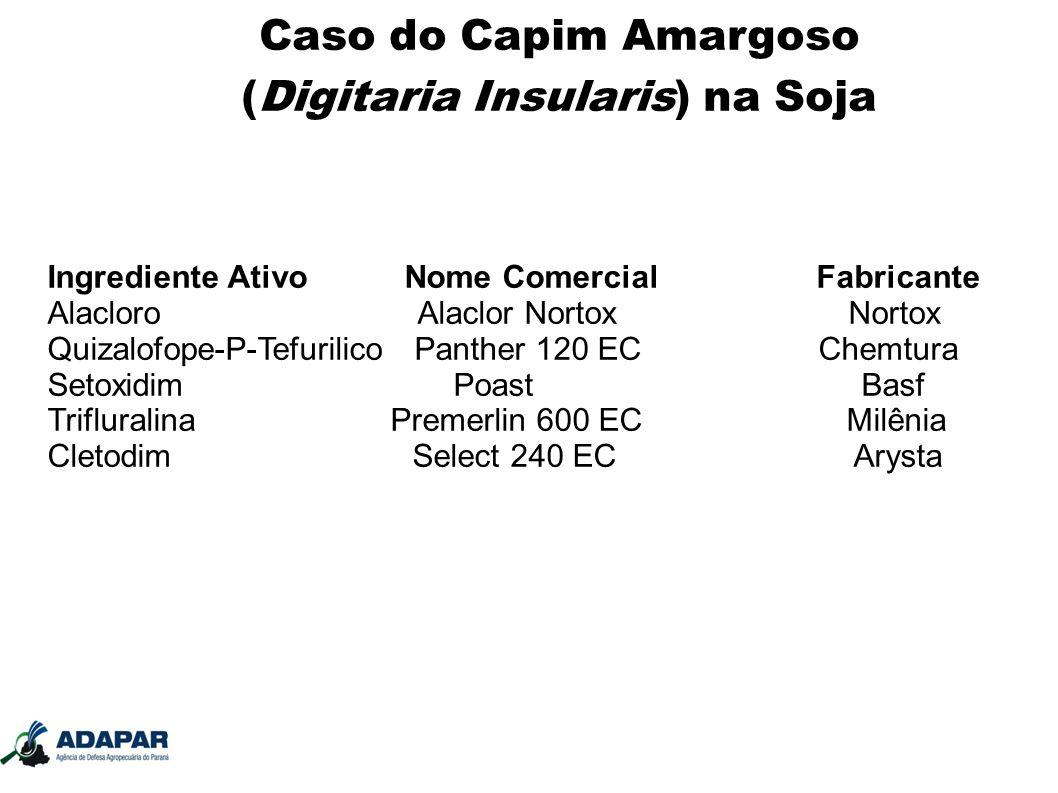 Caso do Capim Amargoso (Digitaria Insularis) na Soja