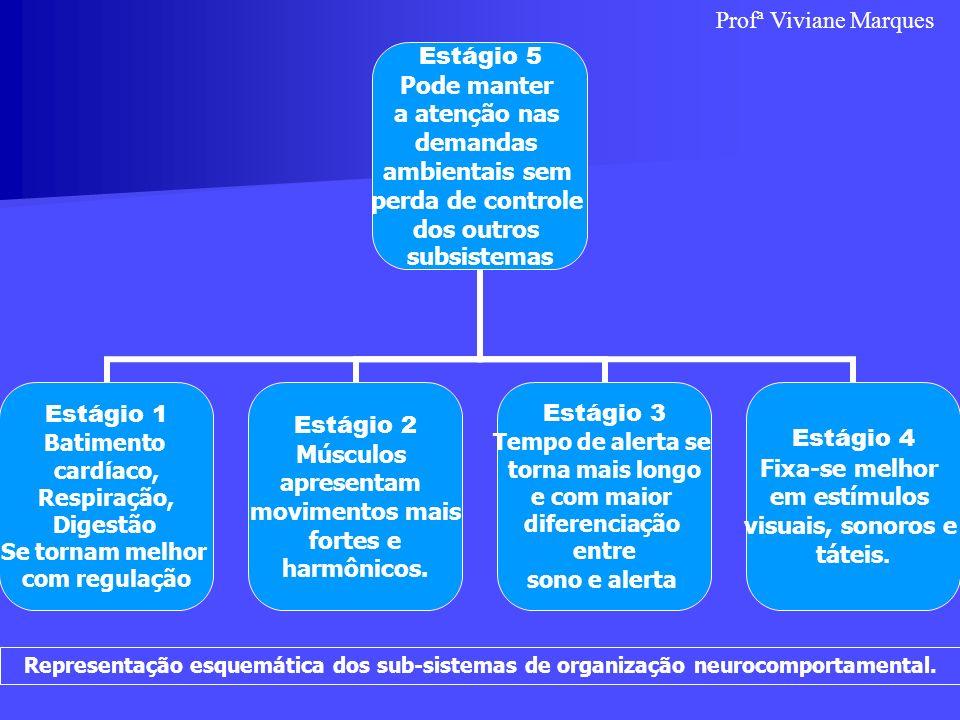Profª Viviane Marques Representação esquemática dos sub-sistemas de organização neurocomportamental.