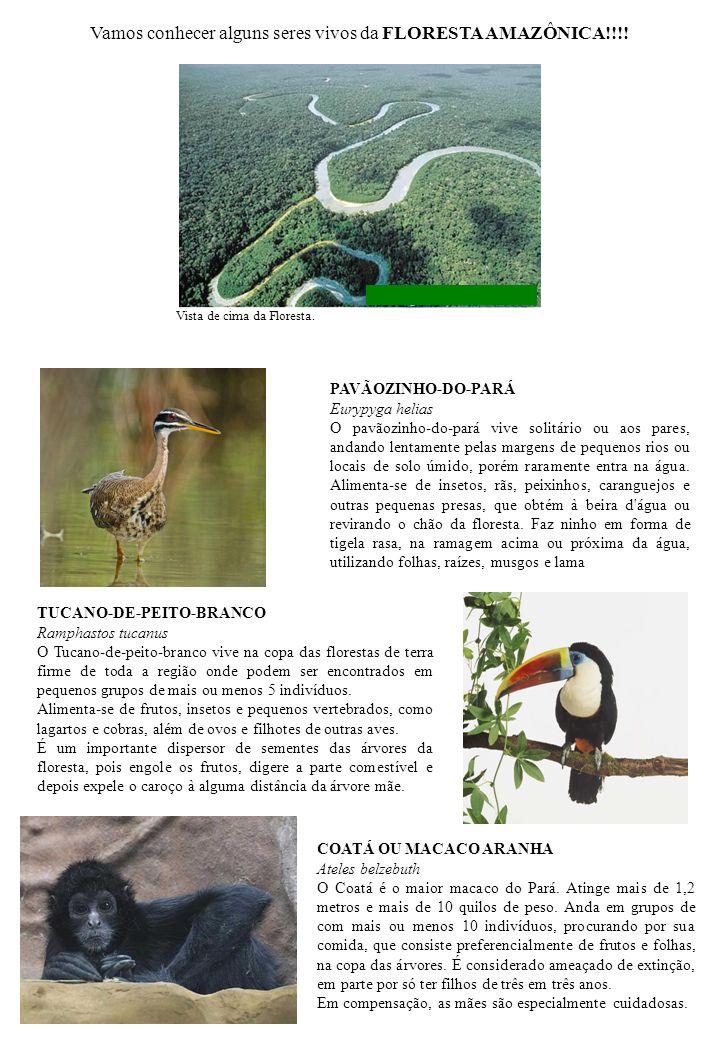Vamos conhecer alguns seres vivos da FLORESTA AMAZÔNICA!!!!